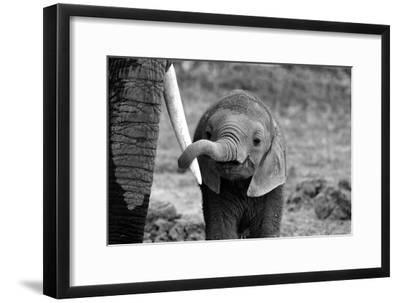 Close-Bjoern Alicke-Framed Premium Photographic Print