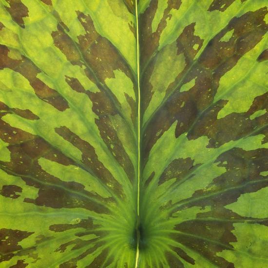 Closeup of Leaf-Micha Pawlitzki-Photographic Print