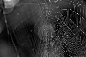 Closeup of Spider Web b/w