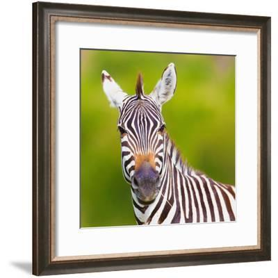 Closeup on Beautiful Zebra's Head Looking Curiously and Standing in Savannah Grass with Sky in the-Sergei Kolesnikov-Framed Photographic Print