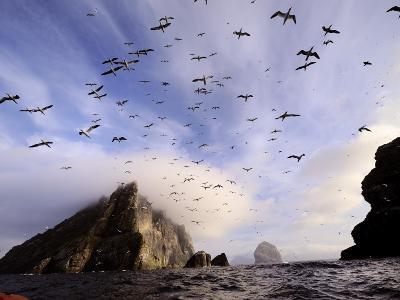 Cloud Covers a Sea Bird Rookery High on a Sea Stack Cliff-Jim Richardson-Photographic Print