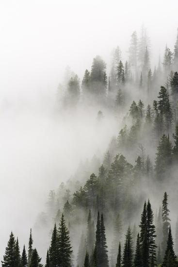 Cloud Forest, Glacier National Park, Montana-Russ Bishop-Photographic Print