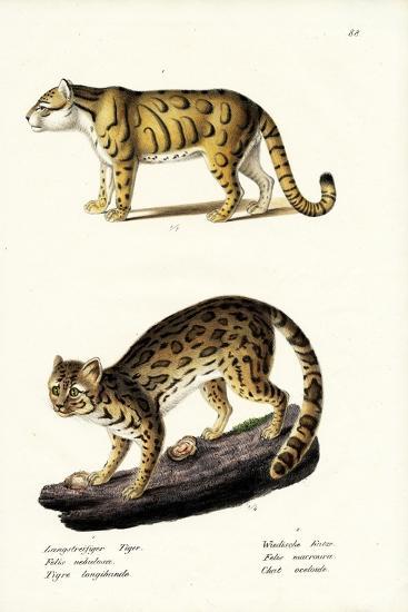 Clouded Leopard, 1824-Karl Joseph Brodtmann-Giclee Print