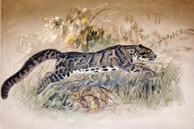 Clouded Leopard, 1851-69-Joseph Wolf-Giclee Print