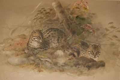 Clouded Leopard (Fleis Macrocelis)-Joseph Wolf-Giclee Print
