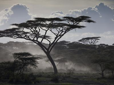 https://imgc.artprintimages.com/img/print/clouds-african-trees-and-dust-on-tanzania-s-serengeti-plain_u-l-pevud50.jpg?p=0