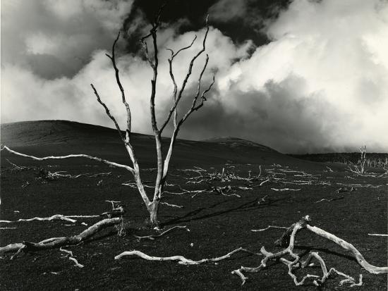Clouds, Lava, Tree, Hawaii, 1978-Brett Weston-Photographic Print
