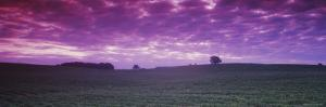 Clouds over a Soybean Field, Albert Lea Township, Freeborn County, Minnesota, USA