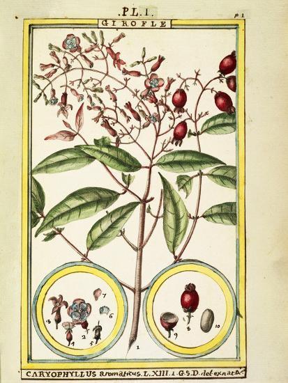 Clove (Caryophyllus Aromaticus), 1789--Giclee Print