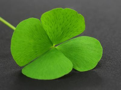 Clover Leaf on Gray Surface- Swapan-Photographic Print