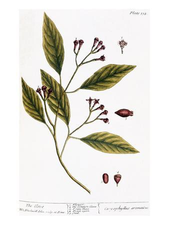 https://imgc.artprintimages.com/img/print/cloves-1735_u-l-pff19a0.jpg?p=0