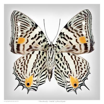 Clown Butterfly underside-Richard Reynolds-Art Print