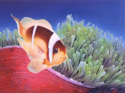 Clown Fish-Durwood Coffey-Giclee Print