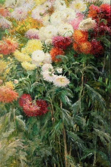 Clump of Chrysanthemums, Garden at Petit Gennevilliers, 1893-Gustave Caillebotte-Giclee Print