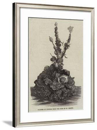 Cluster of Oysters from the Beds of St Brieux--Framed Giclee Print