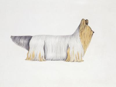 Clydesdale Terrier--Giclee Print