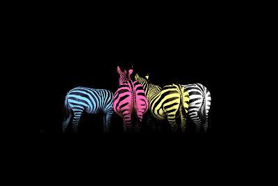Cmyk Colored Zebras-Jakub Jirsak-Photographic Print