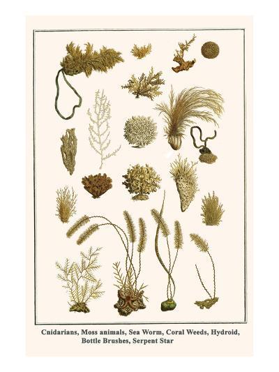 Cnidarians, Moss Animals, Sea Worm, Coral Weeds, Hydroid, Bottle Brushes, Serpent Star-Albertus Seba-Art Print