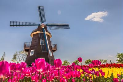 Netherland Fields by cnkdaniel