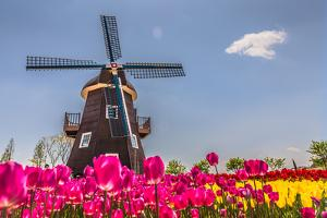 Netherland Fields by cnkdaniel