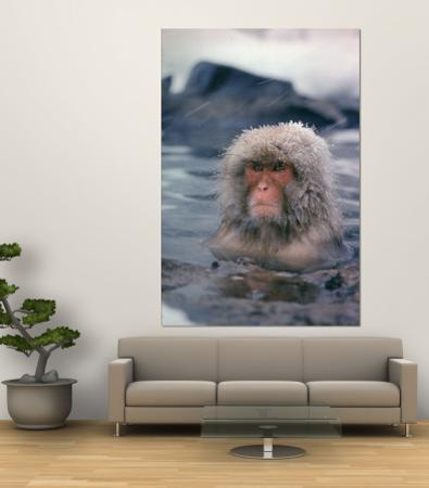 Japanese Macaque, Snow Monkey Sitting in Waters of Hot Spring in Shiga Mountains During a Snowfall