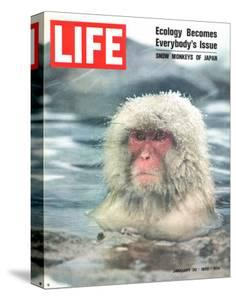 Snow Monkey of Japan in Water, January 30, 1970 by Co Rentmeester