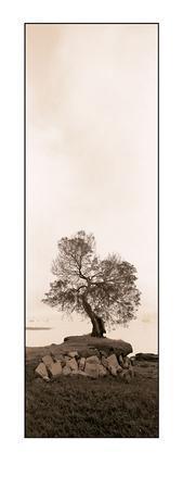 https://imgc.artprintimages.com/img/print/coast-oak-tree_u-l-e7jxv0.jpg?p=0