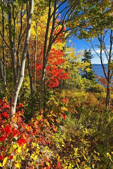 Coastal Forest Autumn Scenic, Maine-George Oze-Photographic Print