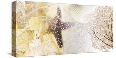 Coastal Gems II--Stretched Canvas Print