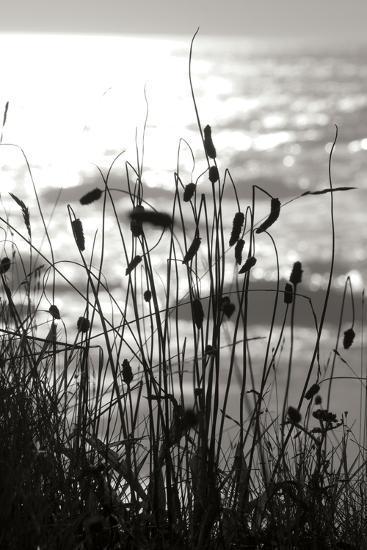 Coastal Grass I-Erin Berzel-Photographic Print