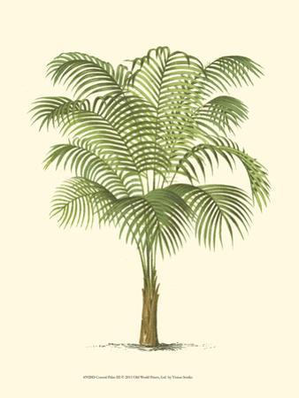 Coastal Palm III