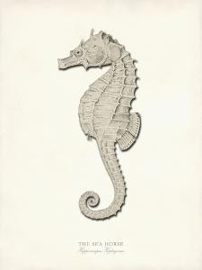 Greige Sea Horse by Coastal Print & Design