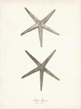 Greige Star Fish