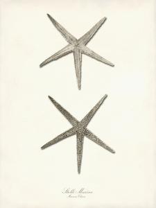 Greige Star Fish by Coastal Print & Design