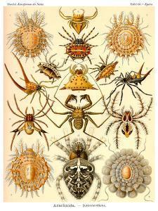 Haeckel Plate 66 by Coastal Print & Design