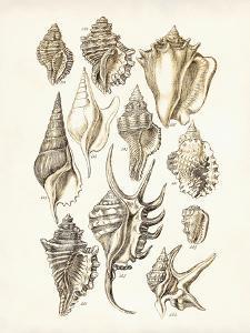 Shells 3 by Coastal Print & Design