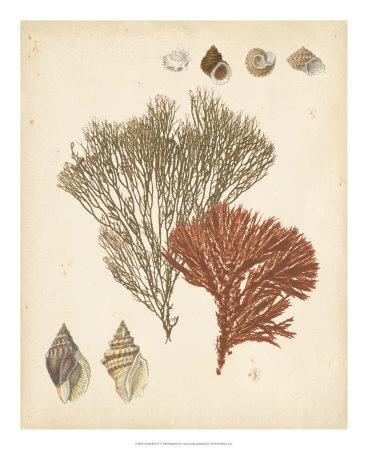 Coastal Relic IV--Giclee Print