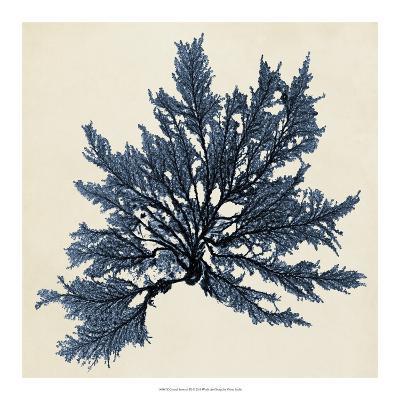 Coastal Seaweed IX-Vision Studio-Giclee Print