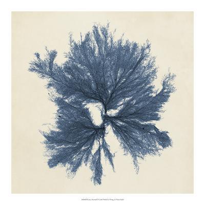 Coastal Seaweed V-Vision Studio-Giclee Print