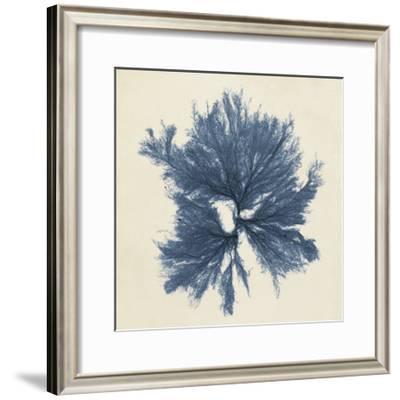Coastal Seaweed V-Vision Studio-Framed Giclee Print