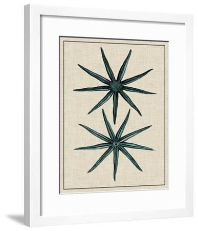 Coastal Starfish IV-Vision Studio-Framed Art Print