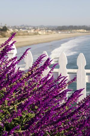 https://imgc.artprintimages.com/img/print/coastal-view-with-flowers-and-fence-pismo-beach-california-usa_u-l-pxr6vh0.jpg?p=0