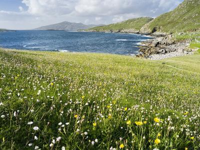 Coastal Wildflowers, Huisinis, Machair. Isle of Harris, Scotland-Martin Zwick-Photographic Print