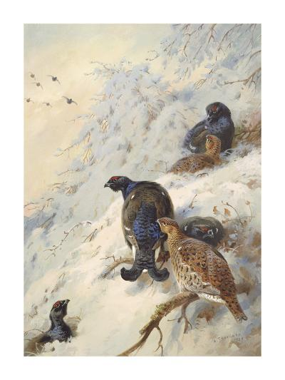 Cock and Hen Black Grouse-Archibald Thorburn-Premium Giclee Print