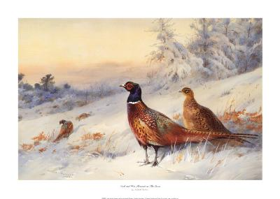 Cock and Hen Pheasant in Snow-Archibald Thorburn-Art Print