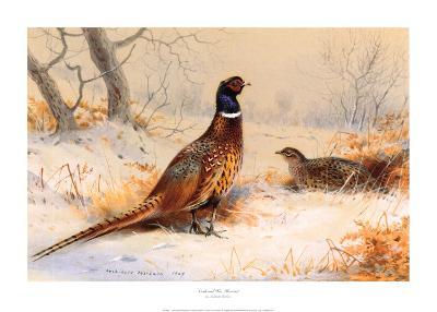 Cock and Hen Pheasant-Archibald Thorburn-Art Print