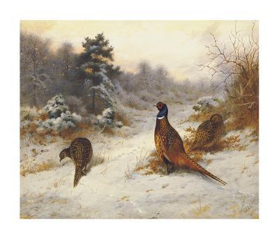 Cock and Hen Pheasants in Winter-Archibald Thorburn-Premium Giclee Print