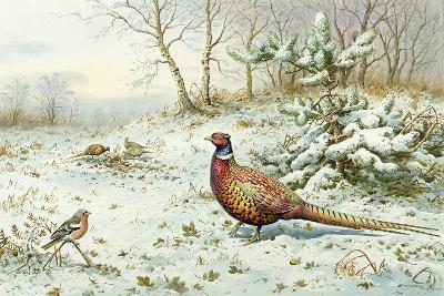 Cock Pheasant and Chaffinch-Carl Donner-Giclee Print