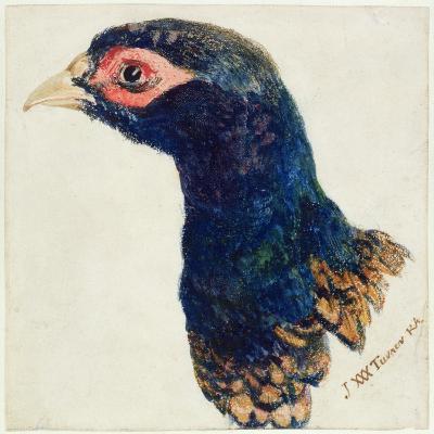 Cock Pheasant, the Farnley Book of Birds, C.1816-J^ M^ W^ Turner-Giclee Print