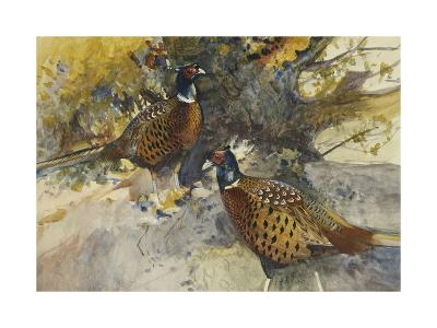 Cock Pheasants under a Beech Tree-Frank		 Southgate-Giclee Print